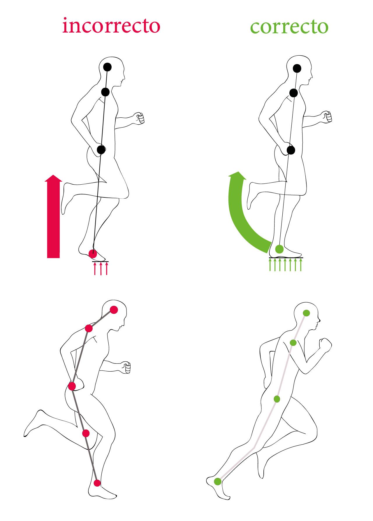 musculos que se usan al trotar