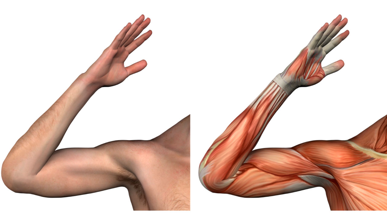 flexibilidad de los musculos del tren inferior
