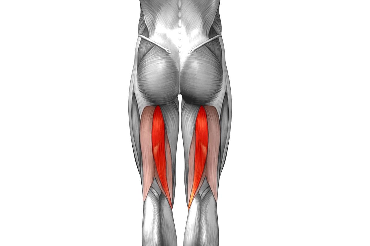 Cuáles son los Músculos más Importantes para Correr? - Escuela de ...